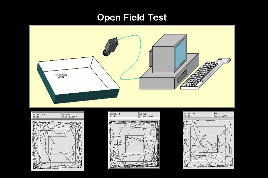 open field test